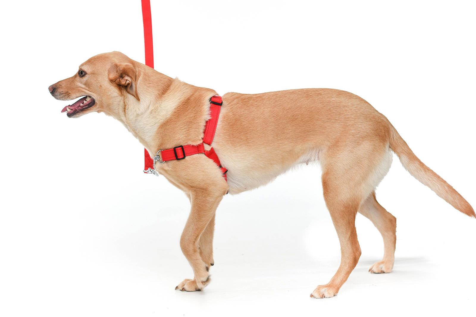 Pettorine per cani quale scegliere
